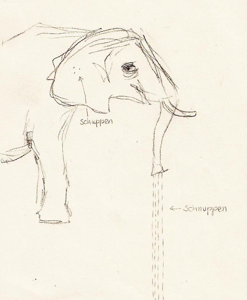 14-elefant